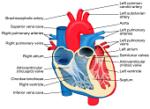 Niewydolność serca – charakterystyka i objawy